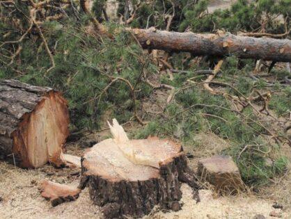 Торги лісовими ресурсами